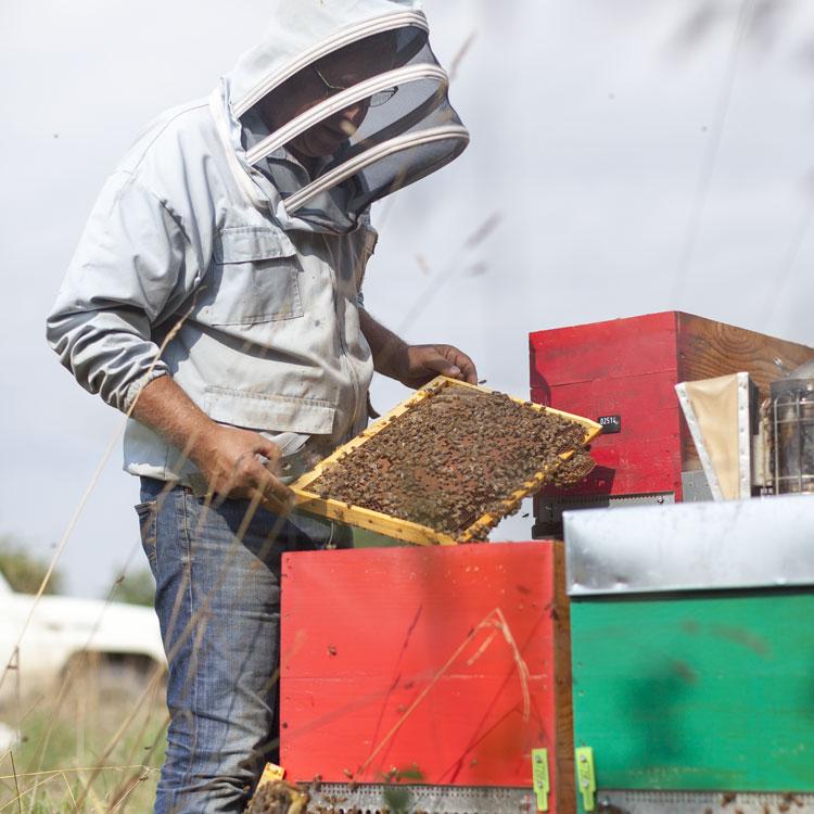 apiculteur lehr miel alsace